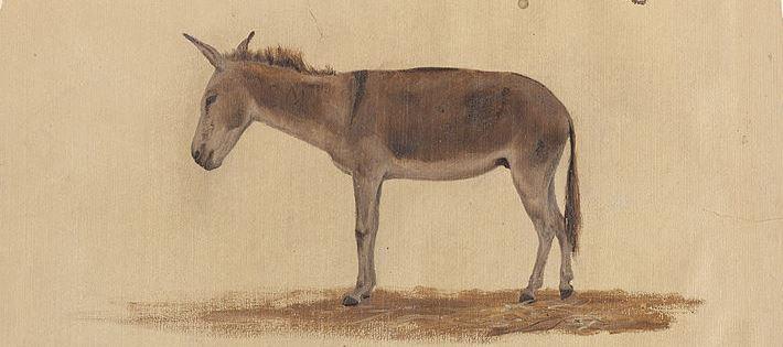 Logística a lomo de burro