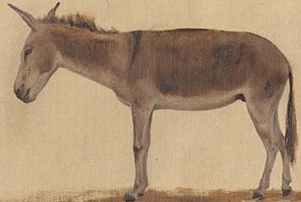 Logística a lomo de burro 3