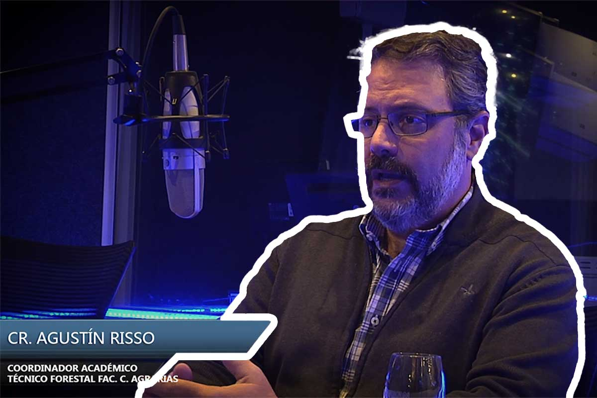 Entrevista al contador público y técnico forestal Agustin Risso